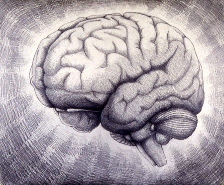 drawings_and_paintings-brains-brains01