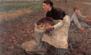 potato-picker-ngv