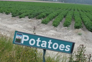 SIGN POTATOES